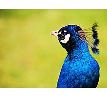 Powerful Blue  Photographic Print