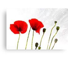 Poppy's in oil Canvas Print