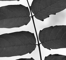 Leaves B &W by elasita