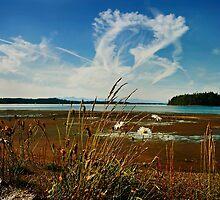 Summer Sky by Lynnette Peizer