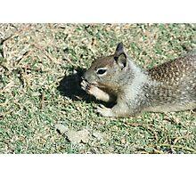 Squirrel Eating Photographic Print