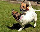 My crazy dogs  by Jemma Richards