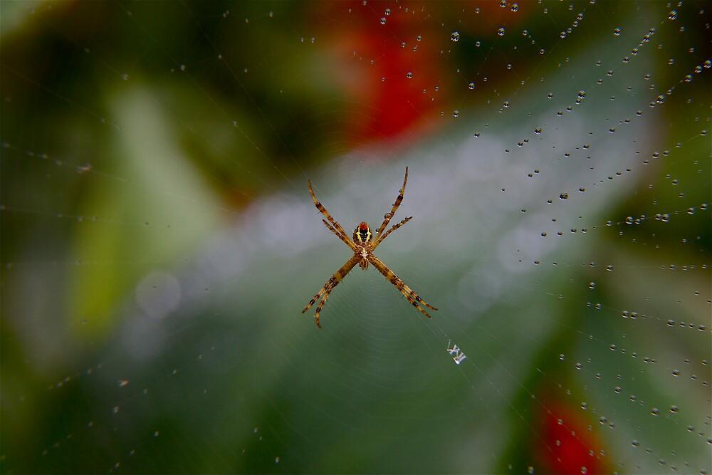 Wet web by John Spies