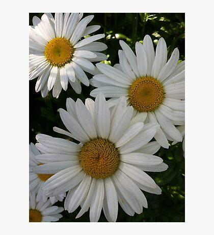 Maybe Daisy Photographic Print