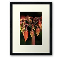 We are not Chillies Framed Print