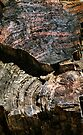 Petrified Forest Abstract by Carole-Anne