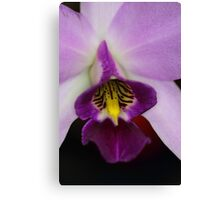 Pinky Purple  Canvas Print
