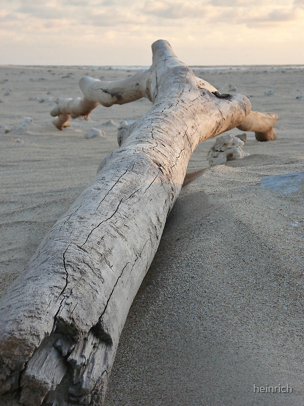 Driftwood by heinrich