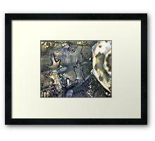 Ancient Fool Framed Print