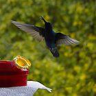 Hummingbird Chirping by Al Bourassa