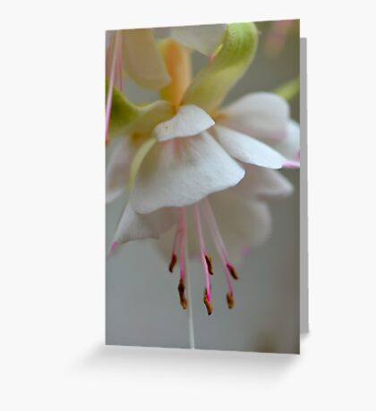 Lucious Pastel Greeting Card