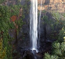 Fitzroy Falls, NSW by SharronS