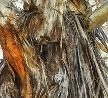 festooned ribbons of bark by Rob Watson