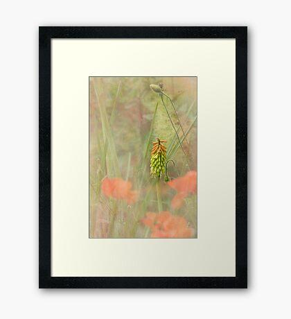 Midsummer's Daydream Framed Print