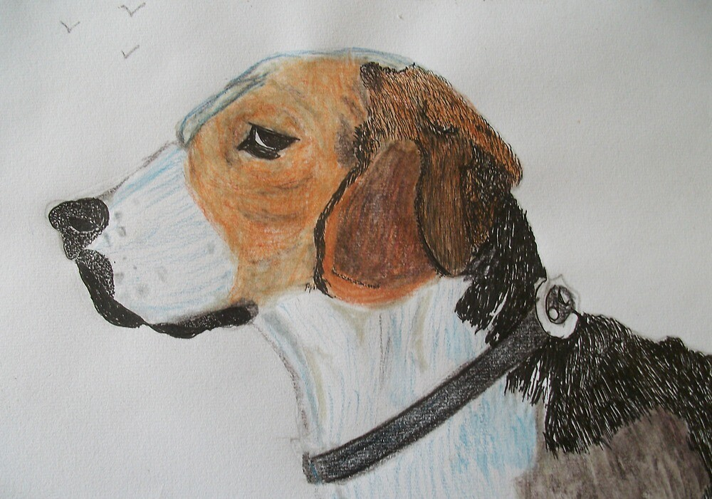 Beagle portrait by GEORGE SANDERSON