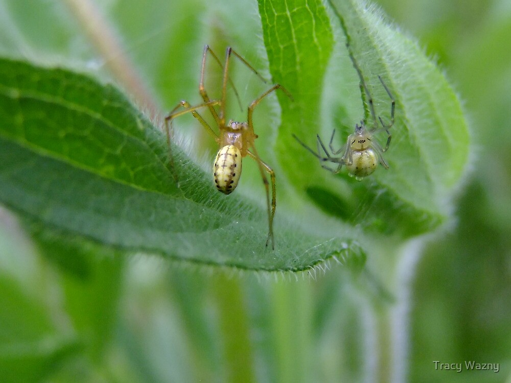 Two Spiders Meet In The Rain... by Tracy Wazny