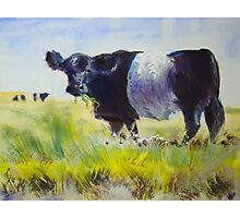 Belted Galloway Cow Painting Photographic Print