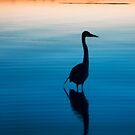 Heron Silouette by Beth Mason