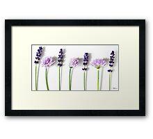Lavender and Chives Framed Print