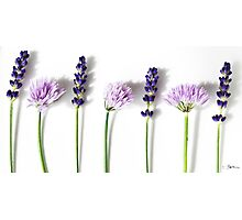 Lavender and Chives Photographic Print