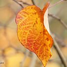 Last leaf hanging by Rainydayphotos