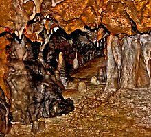 Florida Caverns #1. Marianna. by chris kusik