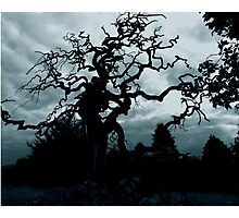 Eerie tree Photographic Print