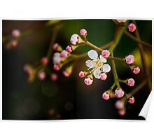 Apple Blossom. Maybe. Poster