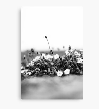 Wildflower Wall Canvas Print