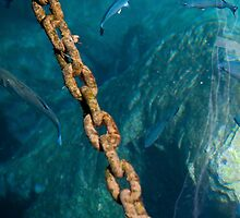 Marine fish and chain by Martyn Franklin