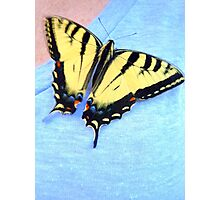 Butterflies are free... Photographic Print