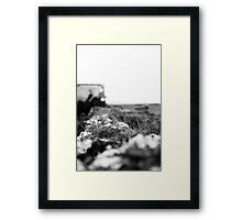 Some Plants Will Grow Anywhere Framed Print