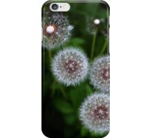Dandelion clocks iPhone case iPhone Case/Skin
