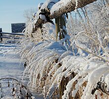 Snow Fence by SimplyKlick