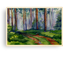 Evergreen forest Canvas Print