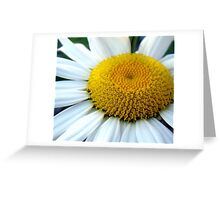 He loves me...He loves me not! Greeting Card