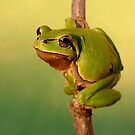 Go go Frog by Istvan froghunter