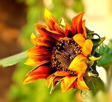 Sunflower Surprise by aprilann