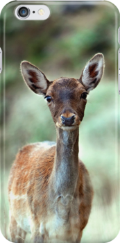 Fallow Deer dama dama case (H) by shelfpublisher