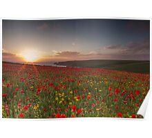 Cornish Poppy Field - Digital Art Poster