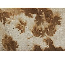 Brown maple leaf stains  Photographic Print
