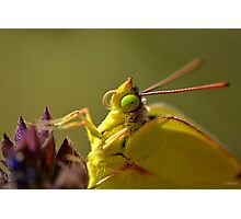 Butterfly with Green Eyes Photographic Print