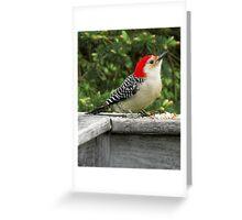 Woodpecker Greeting Card