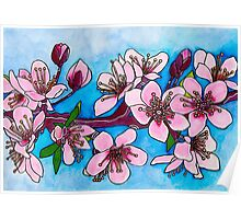 Spring Blooms ~ Cherry Blossoms Poster