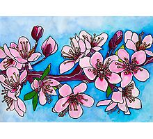 Spring Blooms ~ Cherry Blossoms Photographic Print