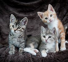 My Three Kittens by DThiessen