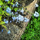 Forget-me-nots by RubyTuesday72