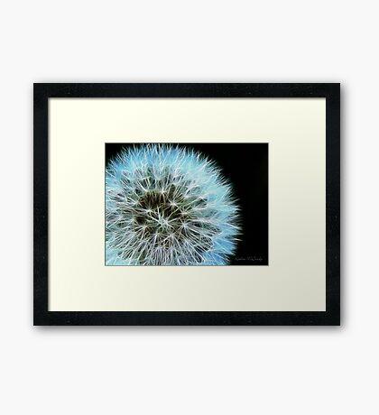 Kathie McCurdy Dandelion Seed Head Framed Print