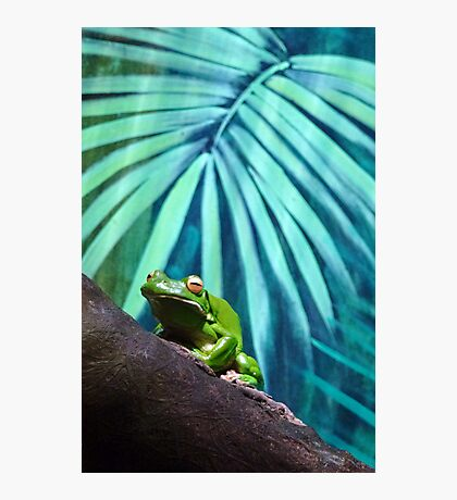 All Glory to the Hypnotoad Photographic Print
