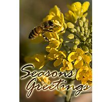 Seasons Greetings from the garden, Honey Bee and Broccoli Flowers Photographic Print